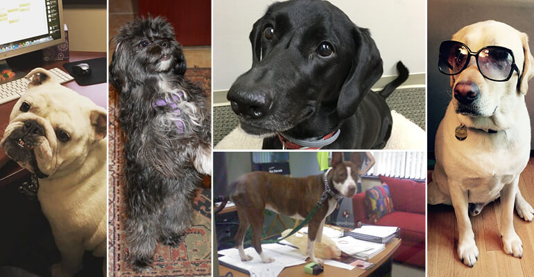 Chester, Millie, Sadie, Suki and Bruiser, the dogs of A&W