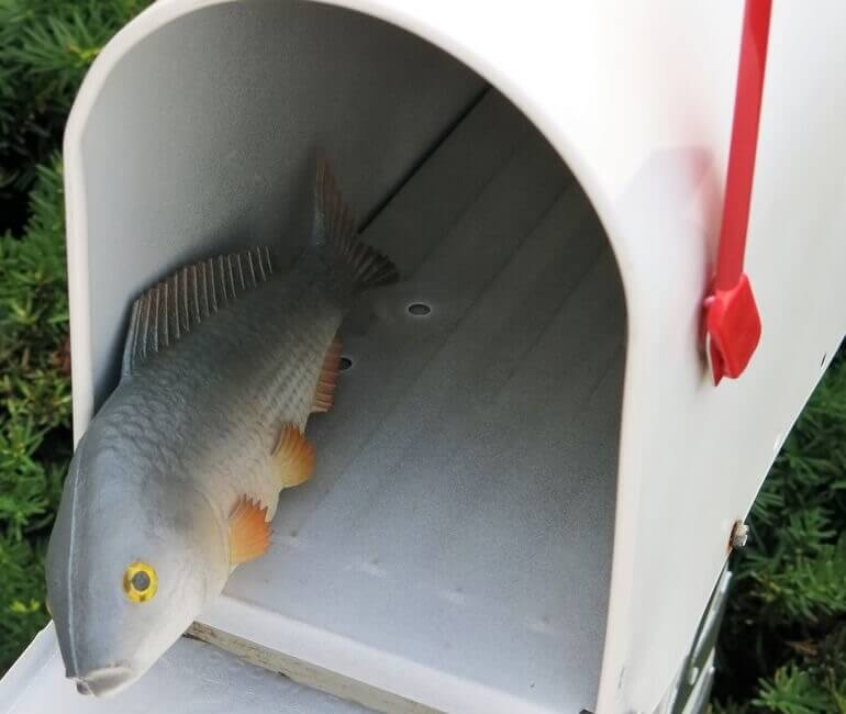 foam fish in mailbox