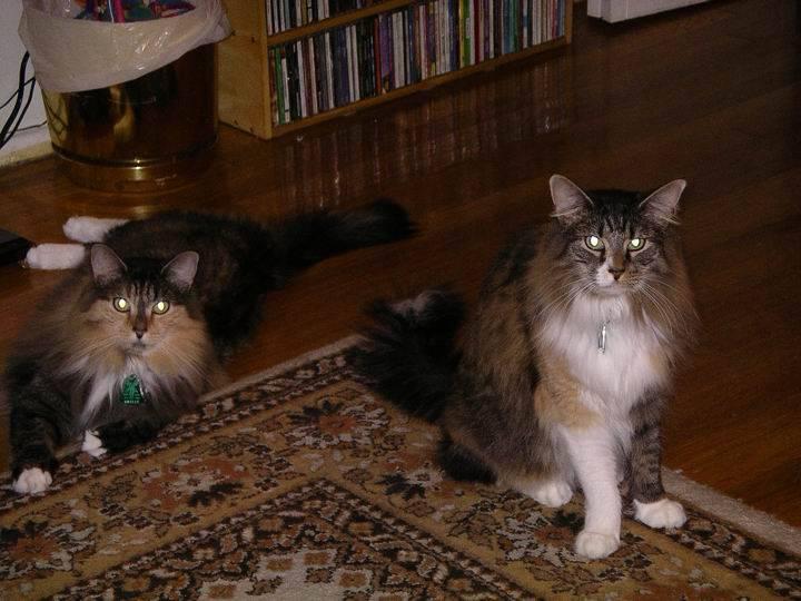 Raisin & Willow cats
